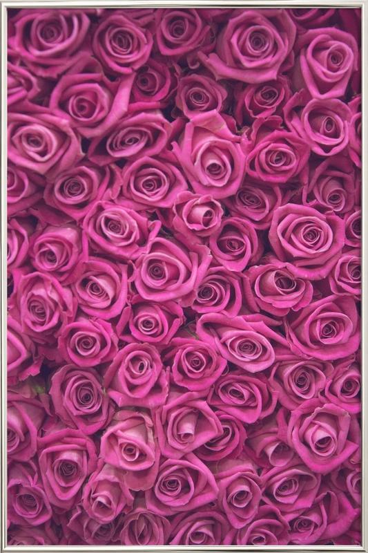 Pink Roses -Poster im Alurahmen
