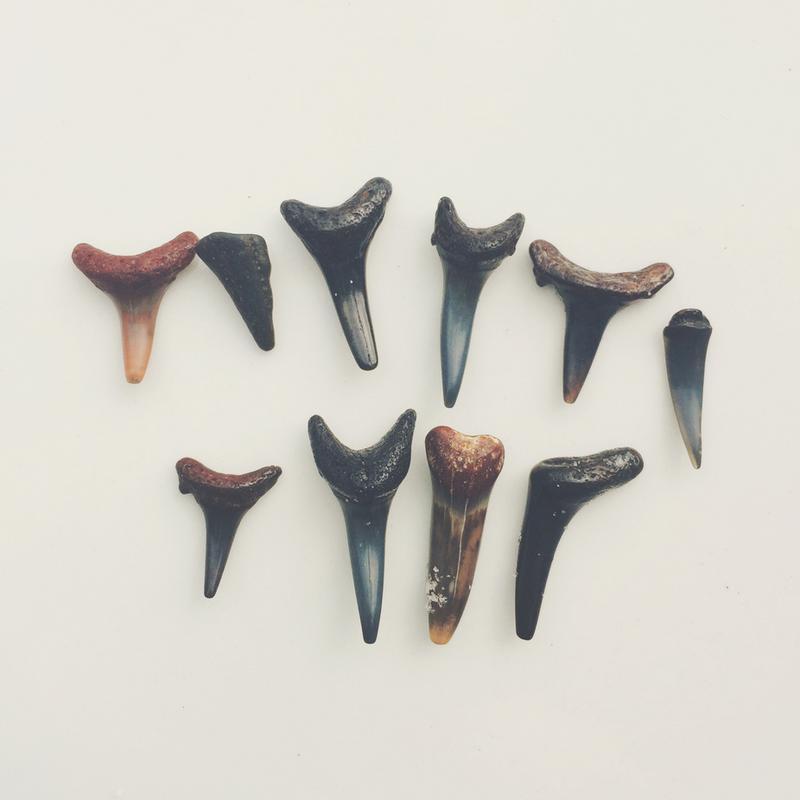 Sharkesteeth -Acrylglasbild
