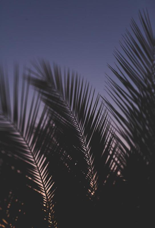 Palms 2 -Acrylglasbild