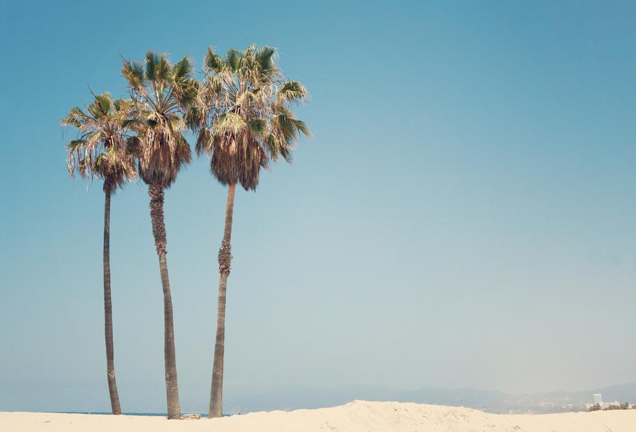 Venice Beach Palms -Acrylglasbild