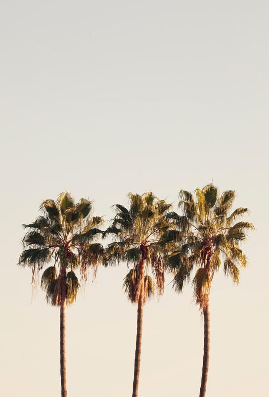 3 Palms Acrylic Print
