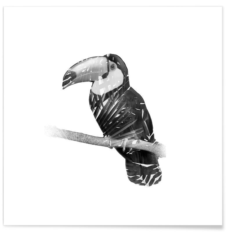 Schwarz & Weiß, Tukane, Toucan -Poster