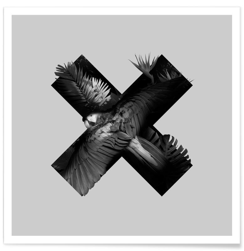 Schwarz & Weiß, Papageien, Xotic -Poster
