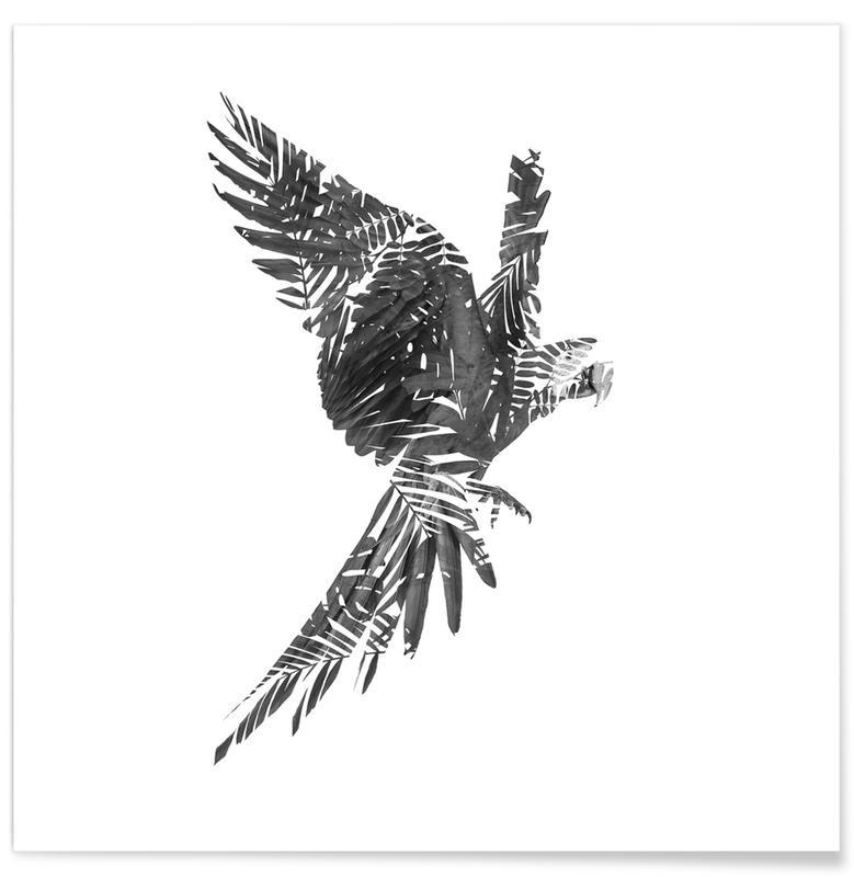 Black & White, Parrots, Parrot Poster