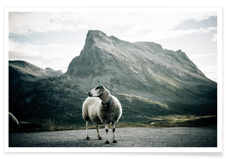 Schafe, Sheep 1 -Poster