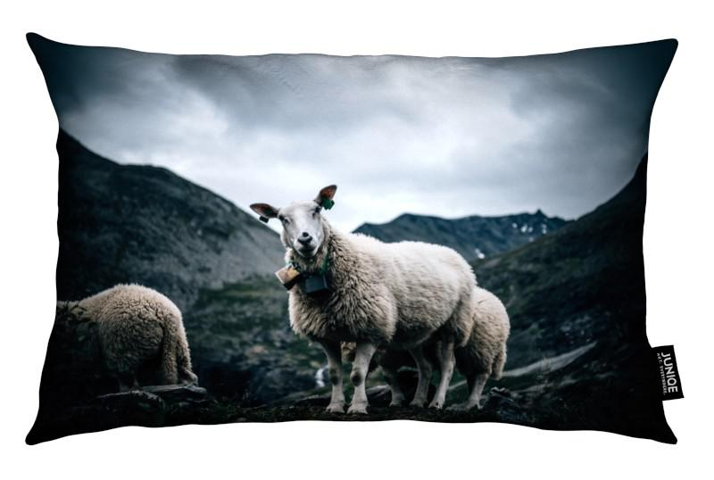 Moutons, Sheep 2 coussin