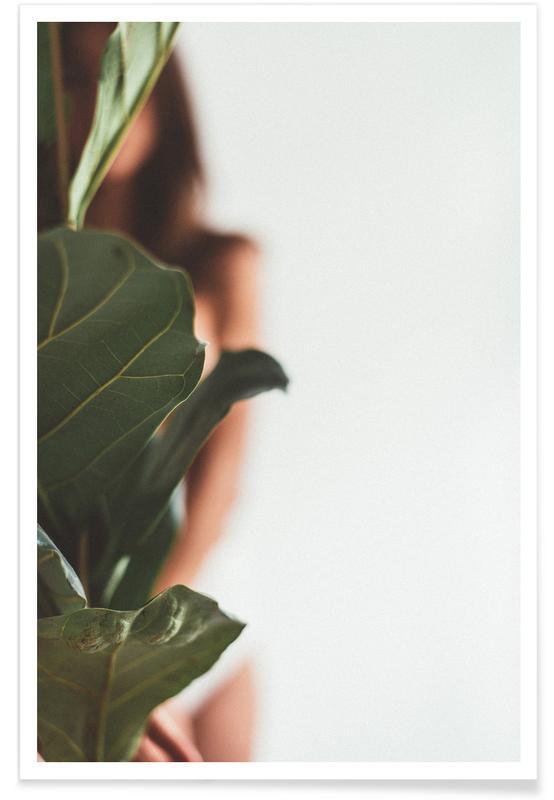 , Ficus Lyrata 1 affiche