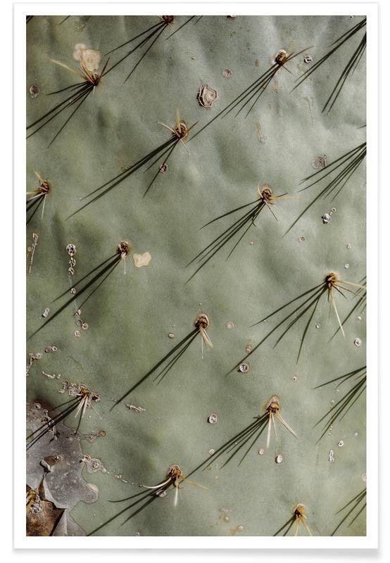 Cacti, Prickle Poster