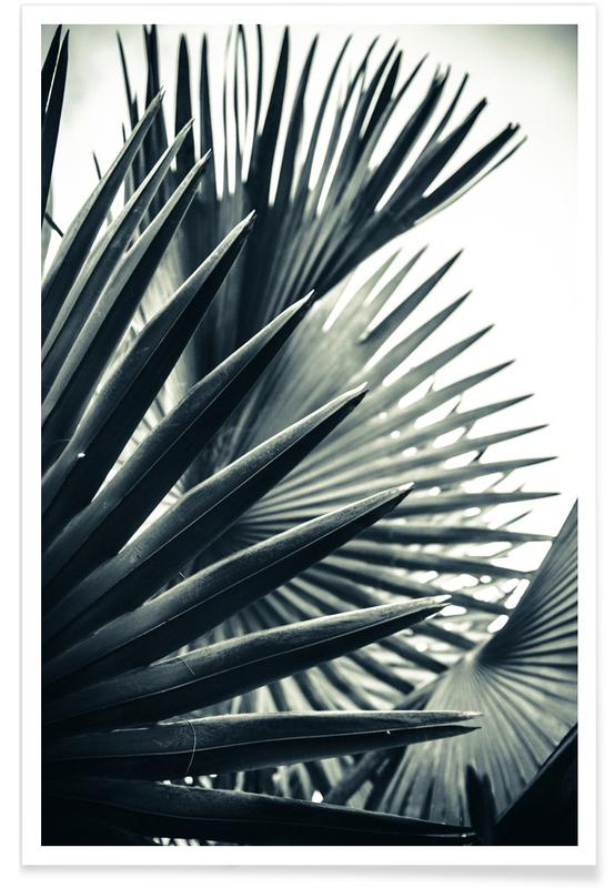 Palm Shade 2 -Poster