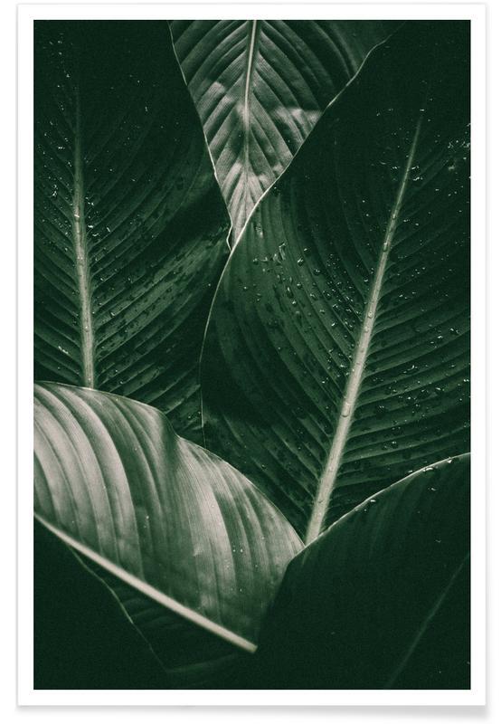 Feuilles & Plantes, Palm Drops affiche