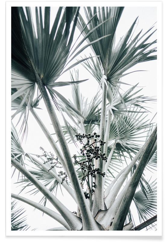 Feuilles & Plantes, Palmiers, Beach Palm Fruits affiche
