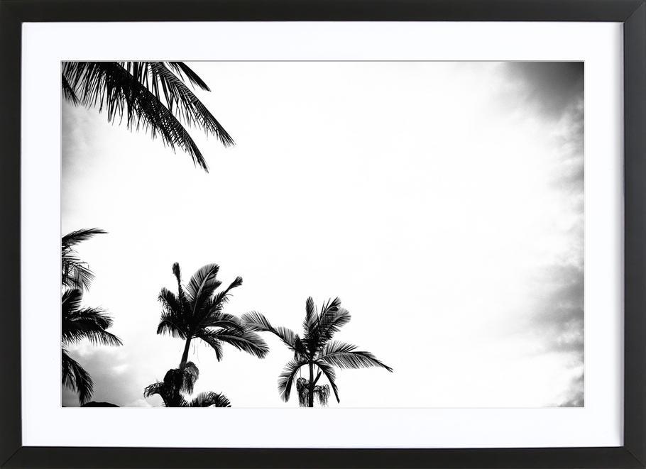 Palm Shade 4 Framed Print