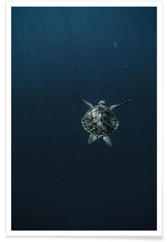 Skildpadder, Flying Plakat