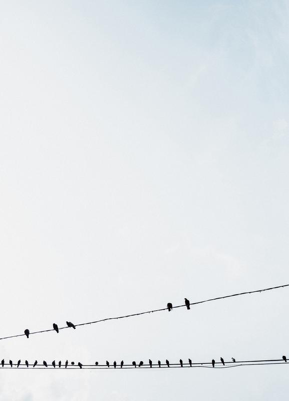 Birds -Leinwandbild
