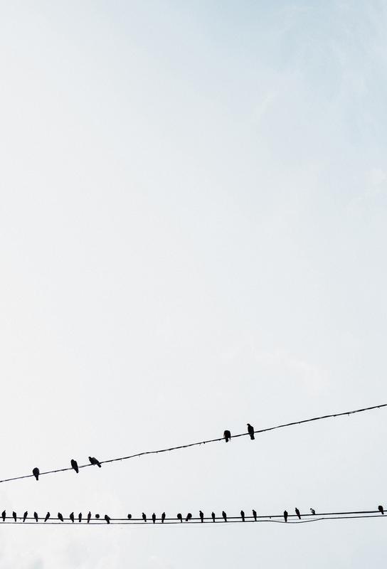 Birds Aluminiumtavla