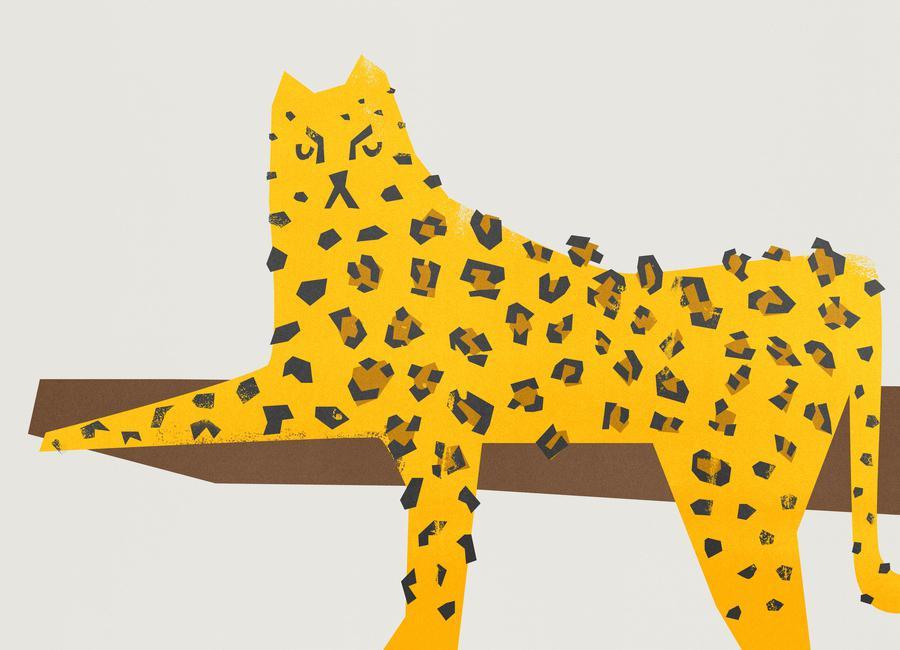 Leopard Lounging Canvas Print