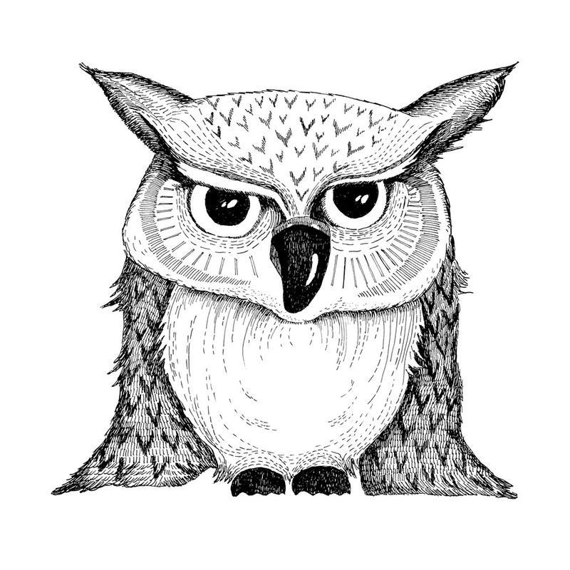 Owl Aluminium Print
