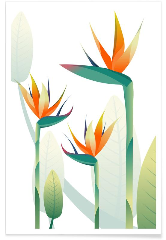 , Strelitzia -Poster