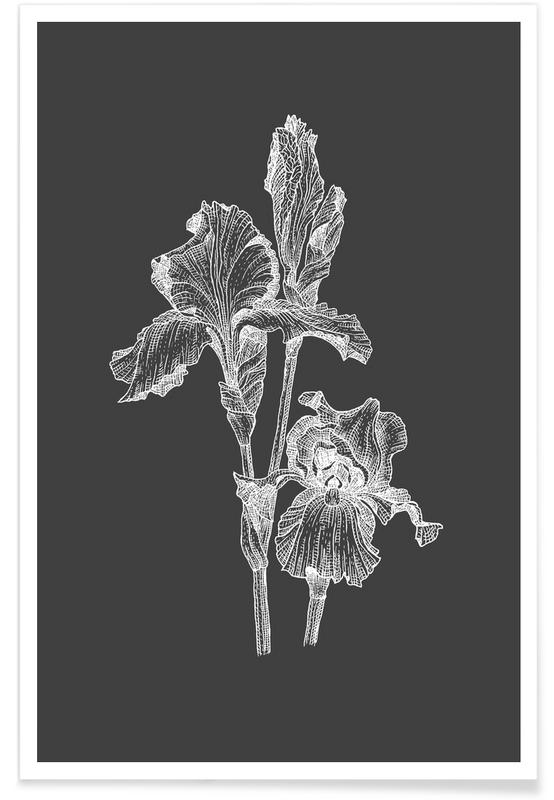 Black & White, Orchids Pencil Sketch Poster
