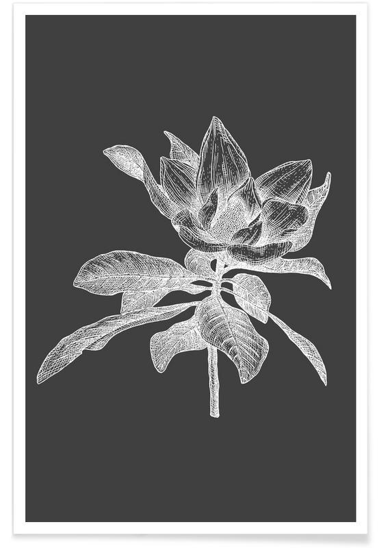 Rétro, Noir & blanc, Magnolia - Croquis au crayon affiche