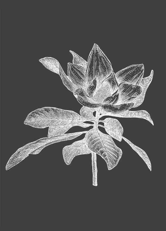 Magnolia - White on Grey Canvas Print