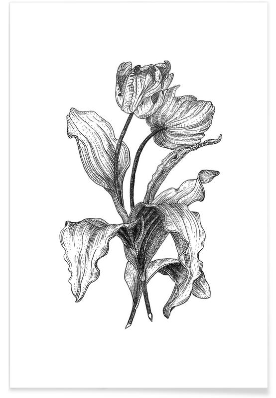 Tulpen, Schwarz & Weiß, Retro, Tulpen-Bleistiftskizze -Poster