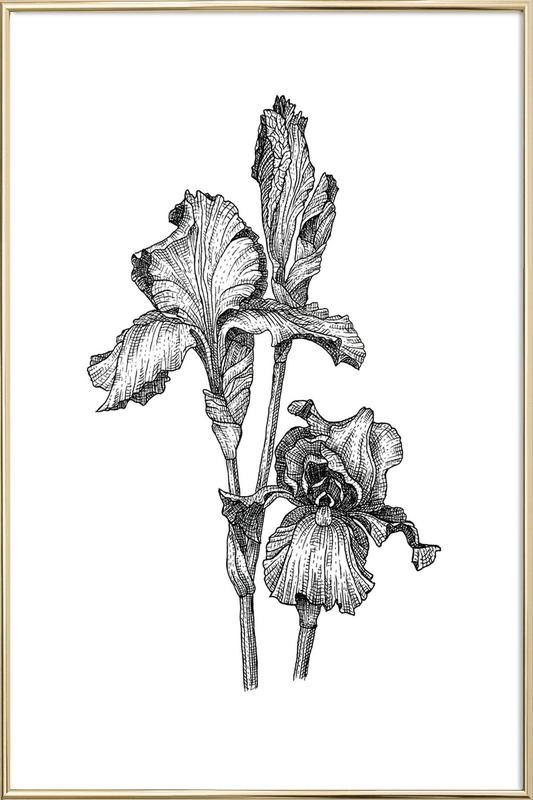 Orchids -Poster im Alurahmen