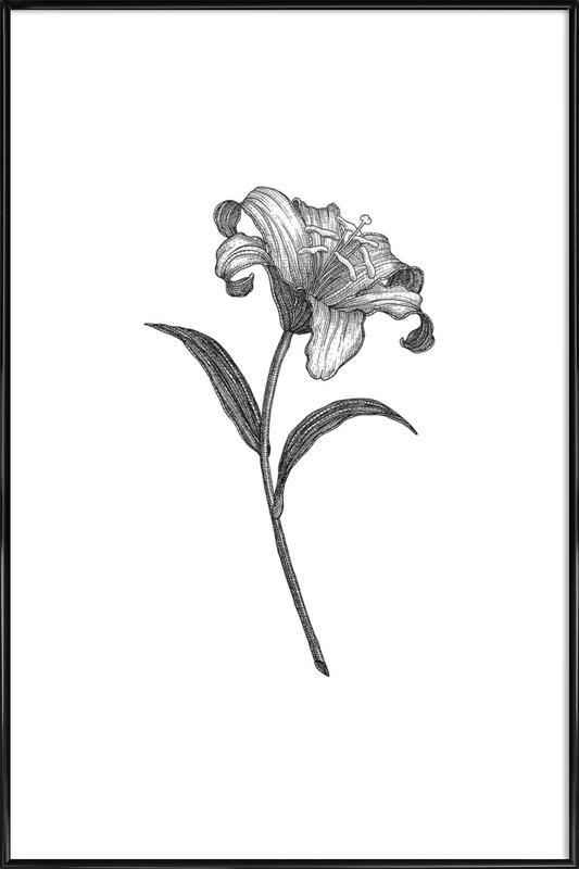 Lily Framed Poster