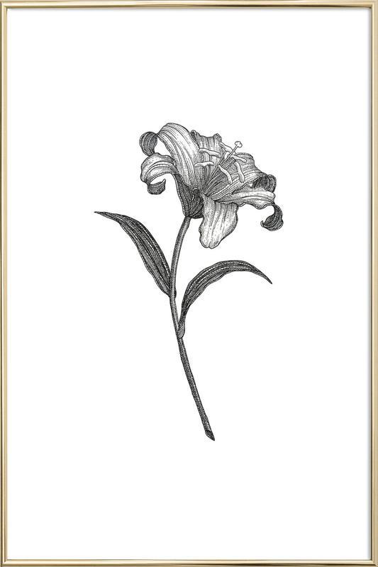 Lily -Poster im Alurahmen