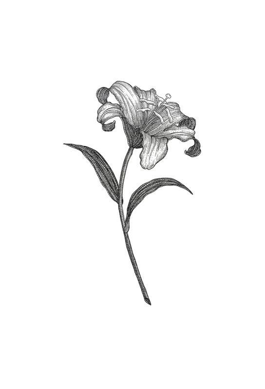 Lily -Acrylglasbild