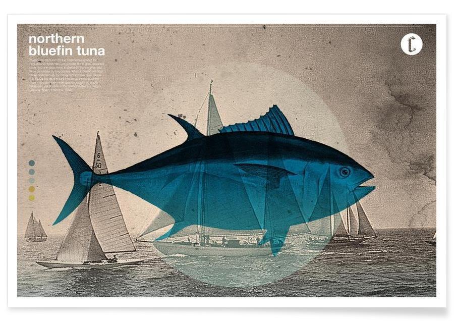 Northern Bluefin affiche