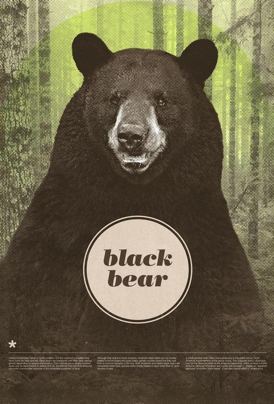 Black Bear Aluminium Print