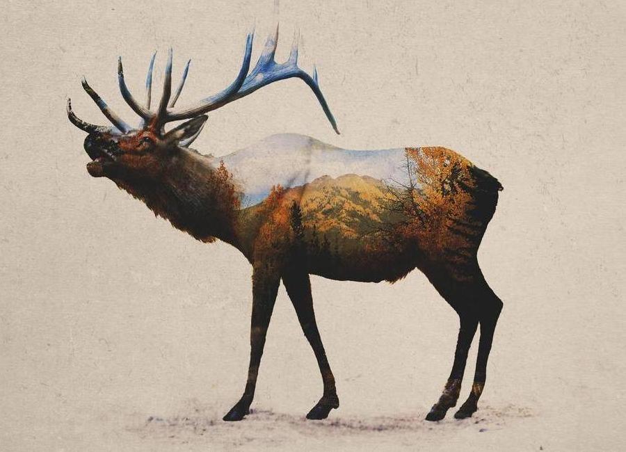 The Rocky Mountain Elk canvas doek