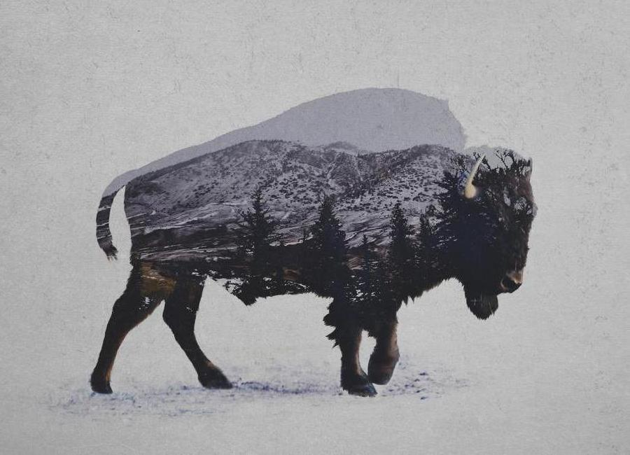 The American Bison toile