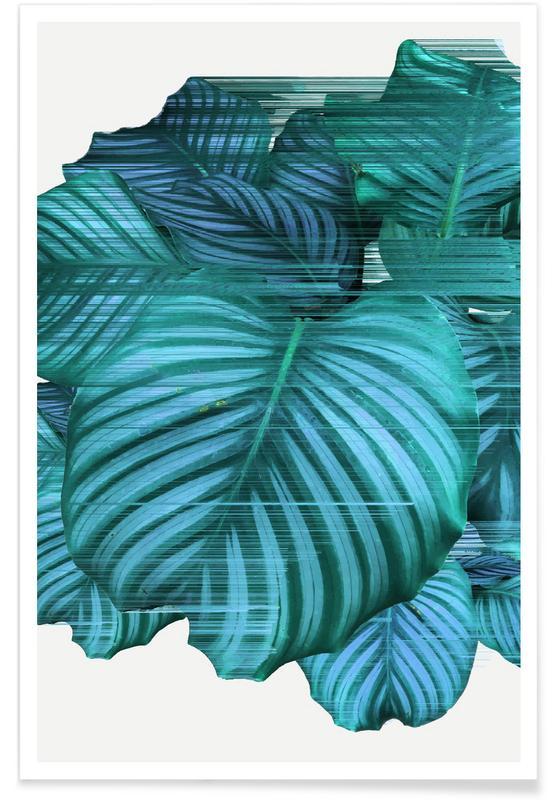 Leaves & Plants, Fast Calatea Poster