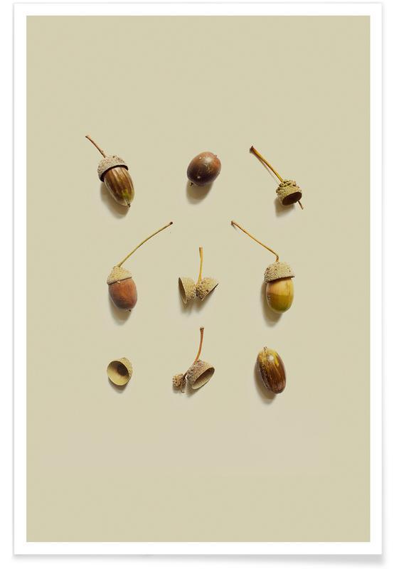 Leaves & Plants, COMPOSIZIONE GHIANDE I Poster