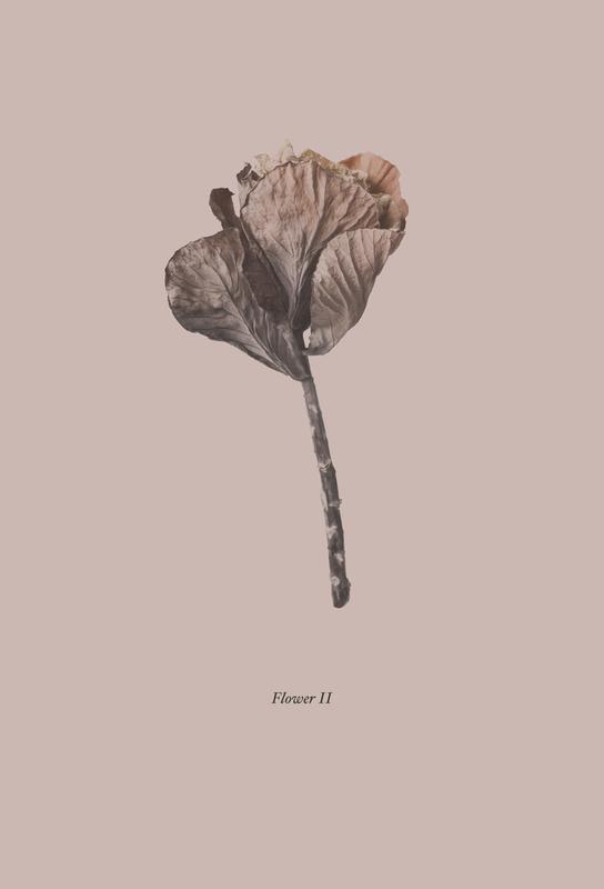 Botanico II -Alubild
