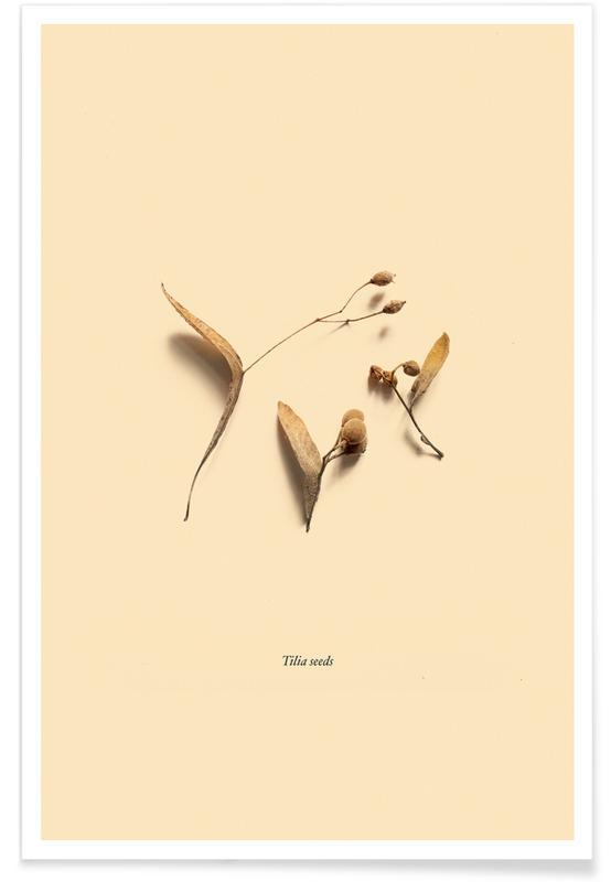 Leaves & Plants, Botanico VI Poster