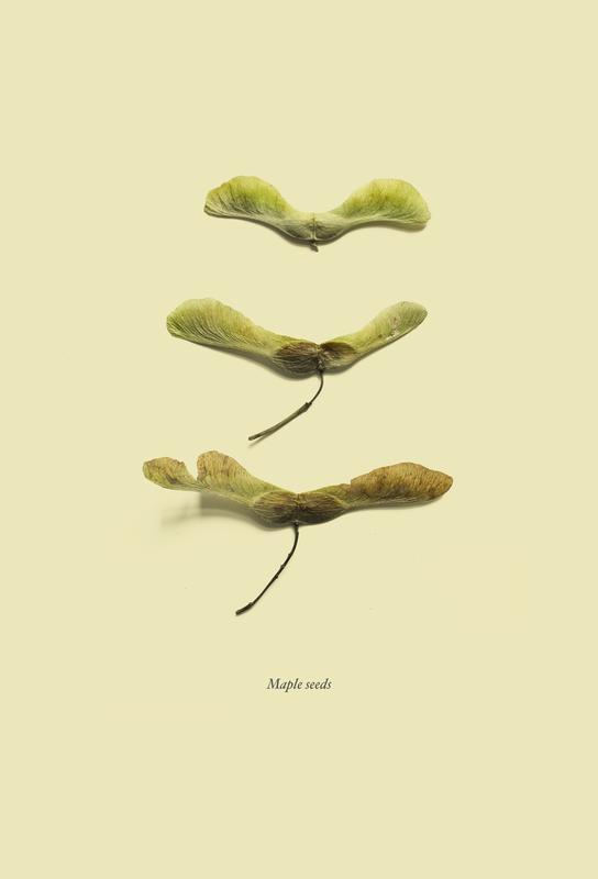 Botanico VIII -Alubild