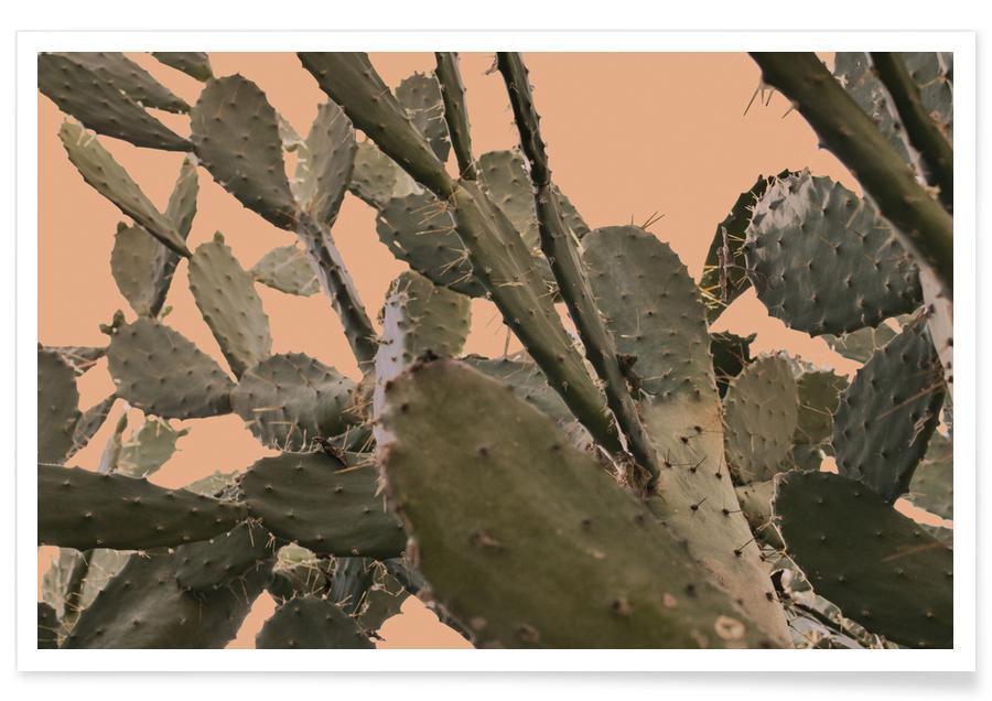 Cacti, Cactus II Poster