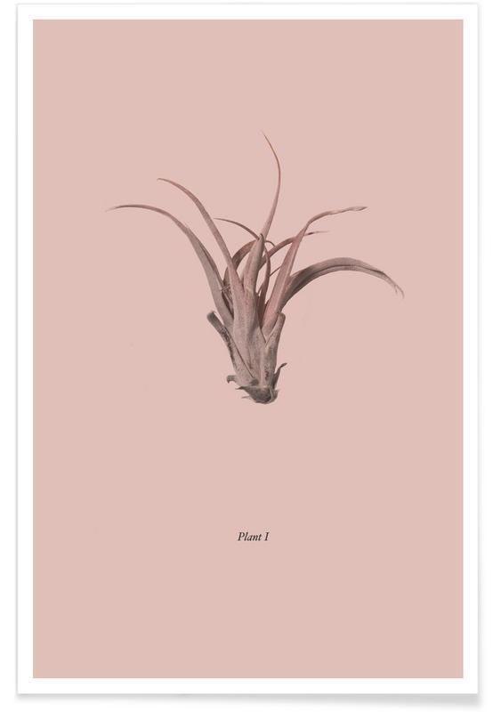Cacti, Botanico V Poster