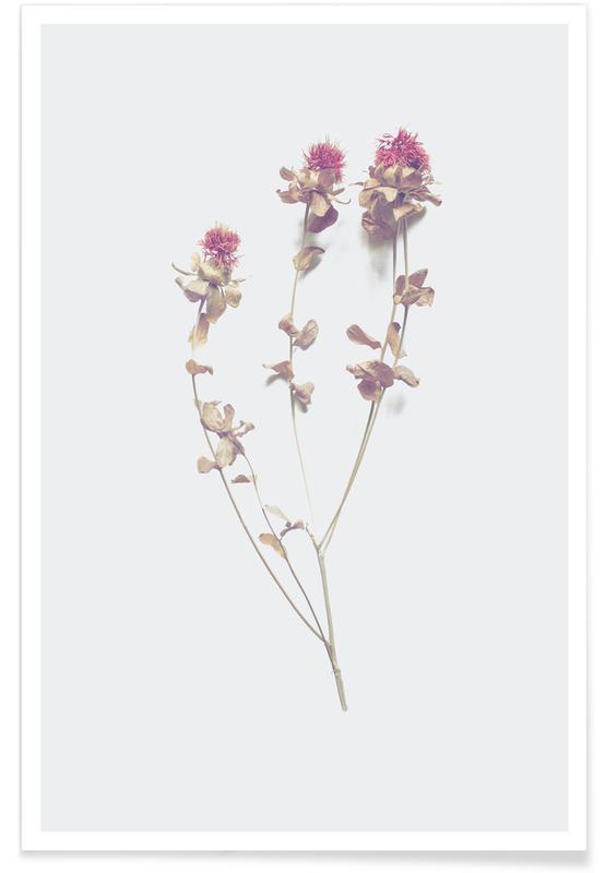 Leaves & Plants, Cardoon I Poster