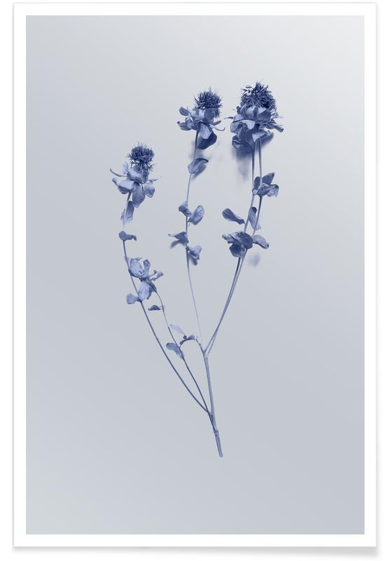 Leaves & Plants, Cardoon II Poster