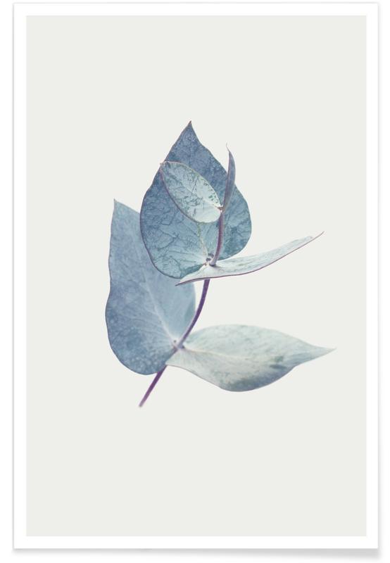 Leaves & Plants, Eucalyptus I Poster