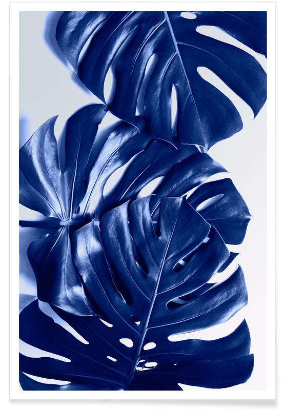 Leaves & Plants, Monstera Blue Poster