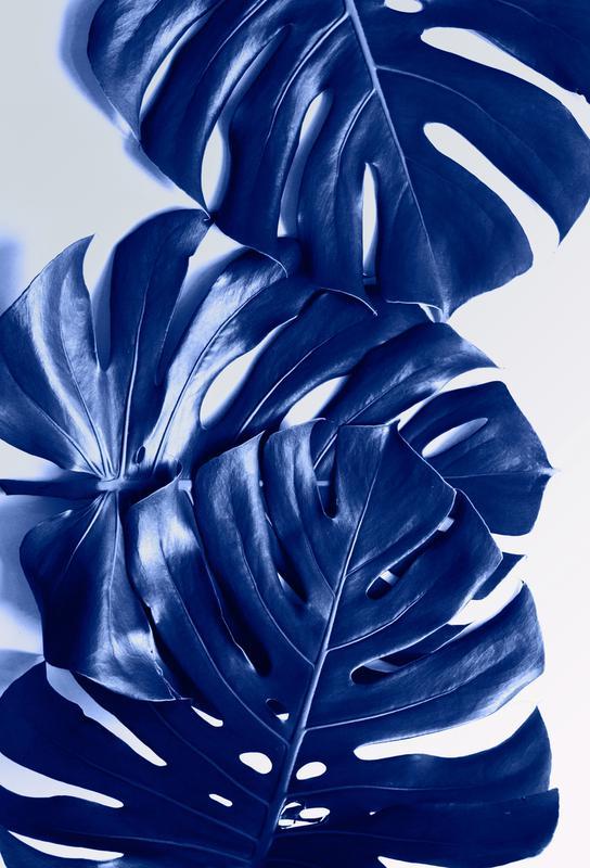 Monstera Blue -Alubild