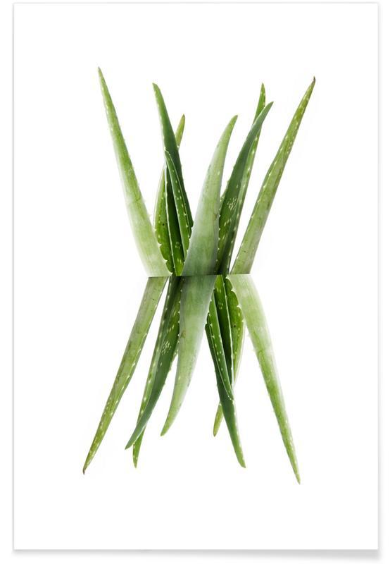 Bladeren en planten, Aloe poster
