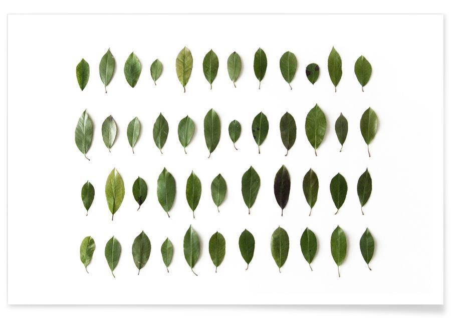 Bladeren en planten, Leaves Collection N1 poster