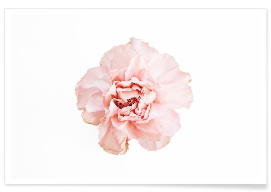 , Carnation -Poster
