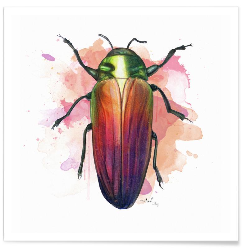 Käfer, Belionota Sumptuosa -Poster